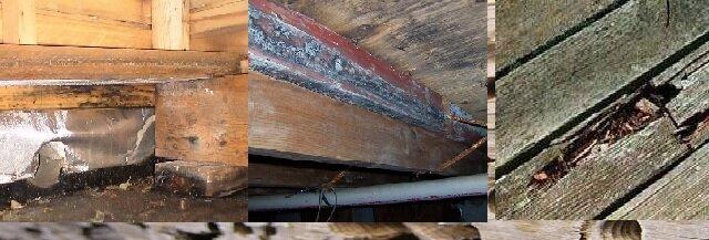 Грибок древесины разрушающий баню
